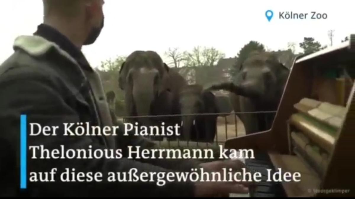 درمان افسردگی حیوانات در باغ وحشهای آلمان + ویدئو