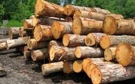 آمار نگران کننده ی کشف قاچاق چوب