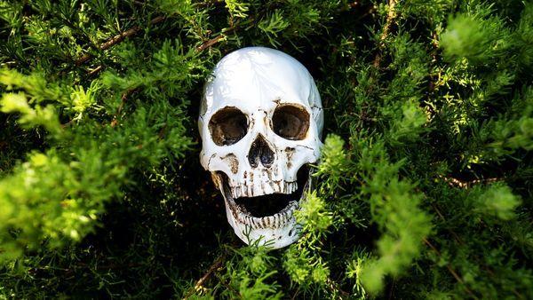 گیاه عجیبی که شما را مجبور به خودکشی میکند+ عکس