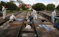 غرق شدن برزیل در فاجعه کرونا