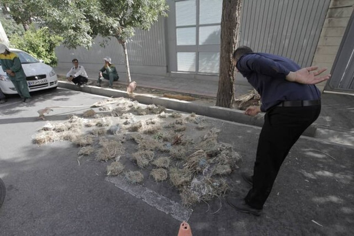 گزارشی از یک اتفاق زیست محیطی در شیراز