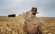 بنیاد گندمکاران: تولید گندم ۳۰ درصد کاهش یافت    میزان خرید به ۵ میلیون تن رسید    دولت نقدینگی کشاورزان را تامین کند