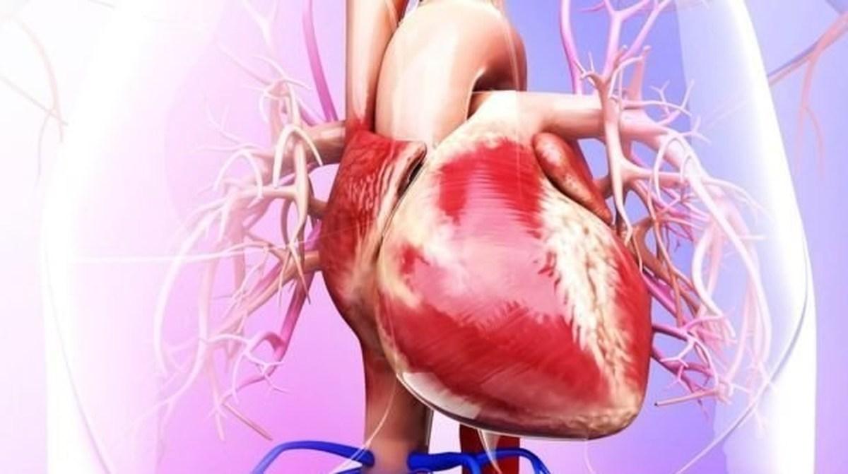 چطور خطر تجمع چربی در اطراف قلب را کاهش دهیم؟