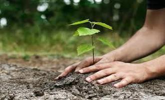 در روز درخت کاری، نهال نکاریم!