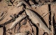 مرگ فاجعه آمیز ماهی ها در رودخانه قزل اوزن + عکس