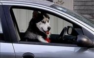 با سگگردانی برخورد شود    اماکن عمومی رفت و آمد حیوانات نیست.