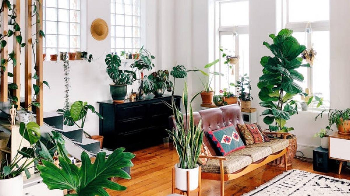 اگر می خواهید خانه شما بوی بهشت بدهد از این گل ها نگهداری کنید