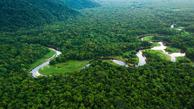 جنگلهای بارانخیز استوایی موجب از بین رفتن دایناسورها شده است