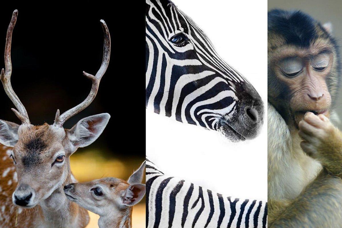 ۳۰ تصویر زیبا از حیوانات؛ حاصل سالها تلاش عکاس خوشذوق