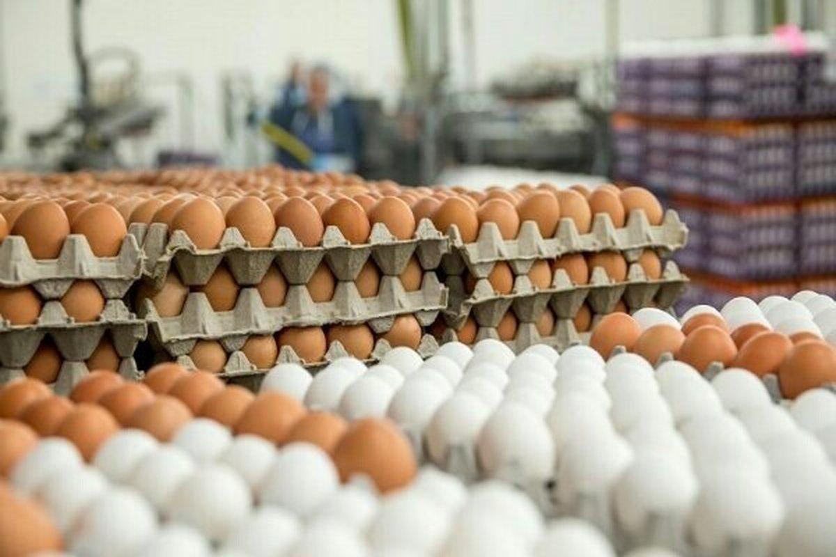 قیمت جدید  تخم مرغ دربازار اعلام شد