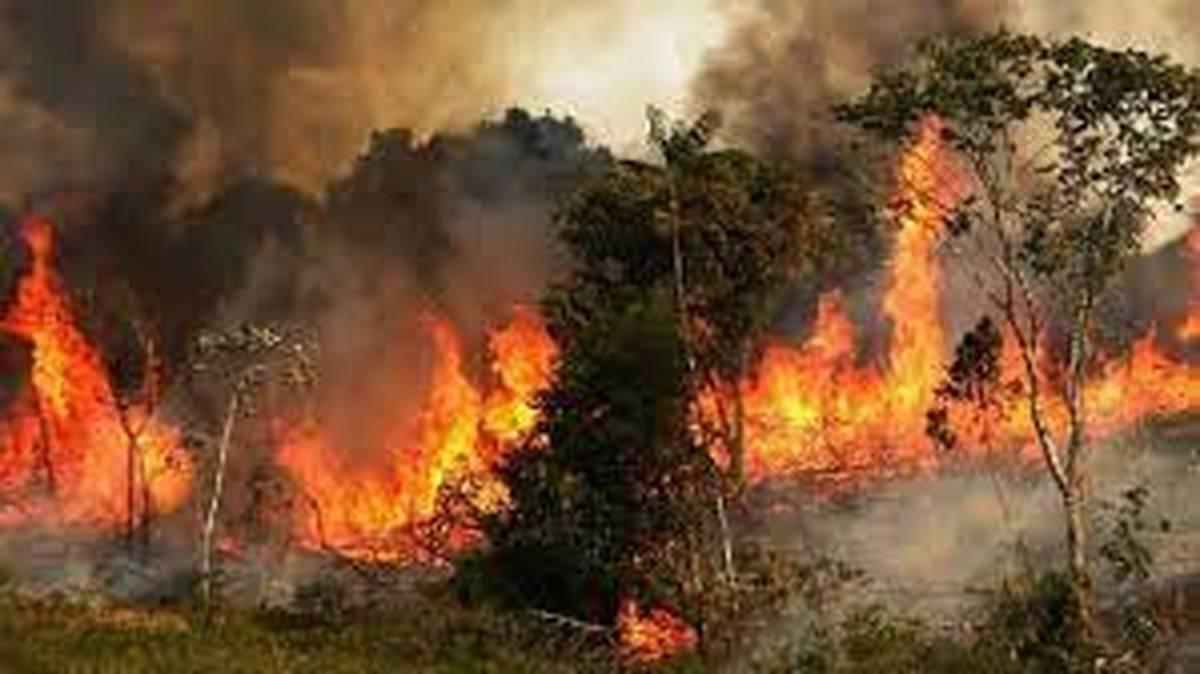 آتشسوزی گسترده در جنگلهای بوزین رخ داد