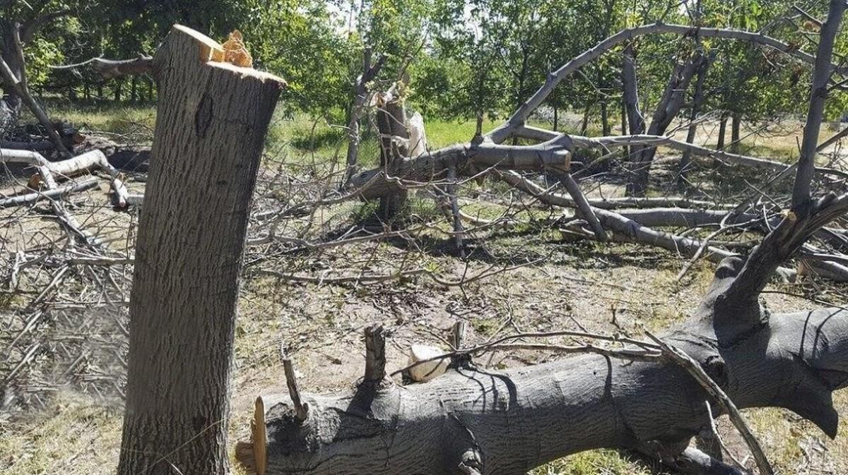 چطور جریمه قطع درختان باغ بهشت نصف شد