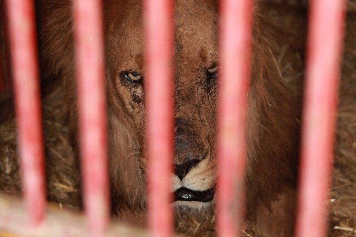 واکنش محیط زیست فارس به شیرآزاری در باغ وحش شیراز
