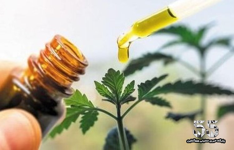 مجوز صدور ۲ داروی گیاهی برای تسکین بیماران کرونایی تایید شد