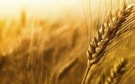 اجرت نگهداری گندم در سیلوها بیش از ۷ سال ثابت است
