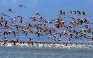حدود۵۶۰۰ کیلوگرم سرب سالانه وارد خلیج گرگان می شود.