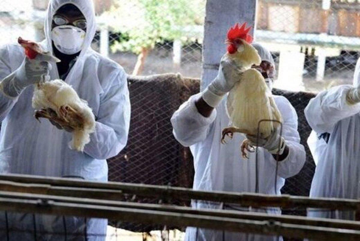 اروپا، درگیر دو ویروس مرگبار