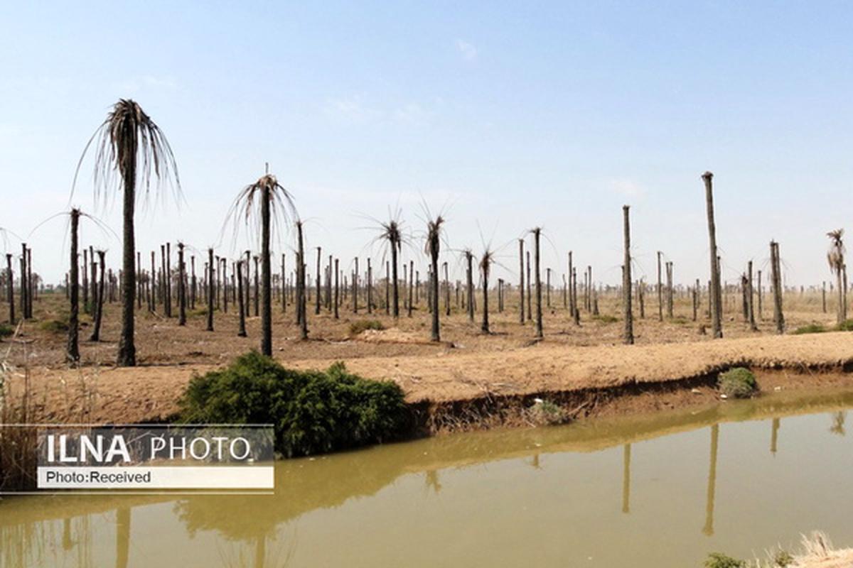 شمارش معکوس برای نابودی کشاورزی خوزستان